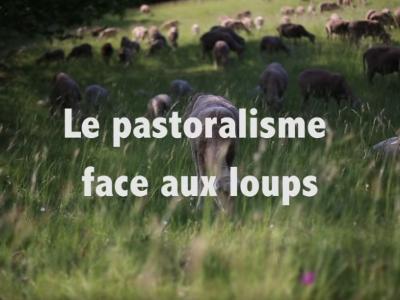 Le pastoralisme face aux loups